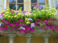 Cveće na terasi