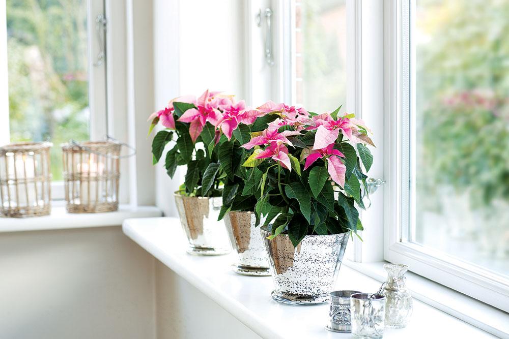 Postavljanje biljaka i vaza sa cvećem na prozorsku dasku