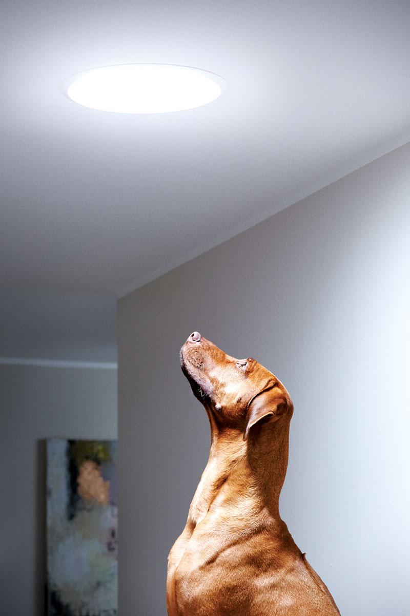 Velux - prirodan izvor sunčeve svetlosti
