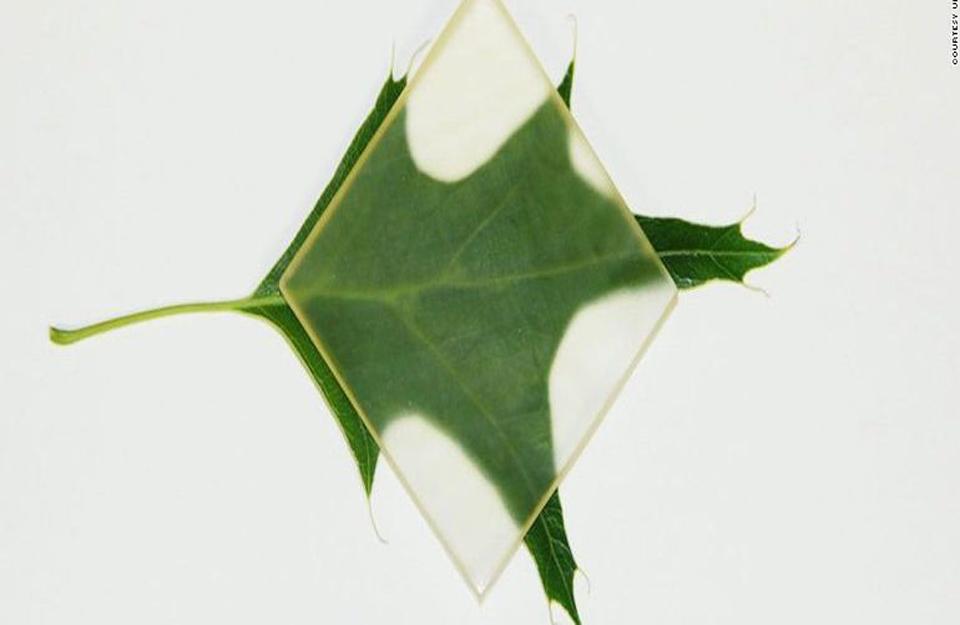 Transparentno drvo