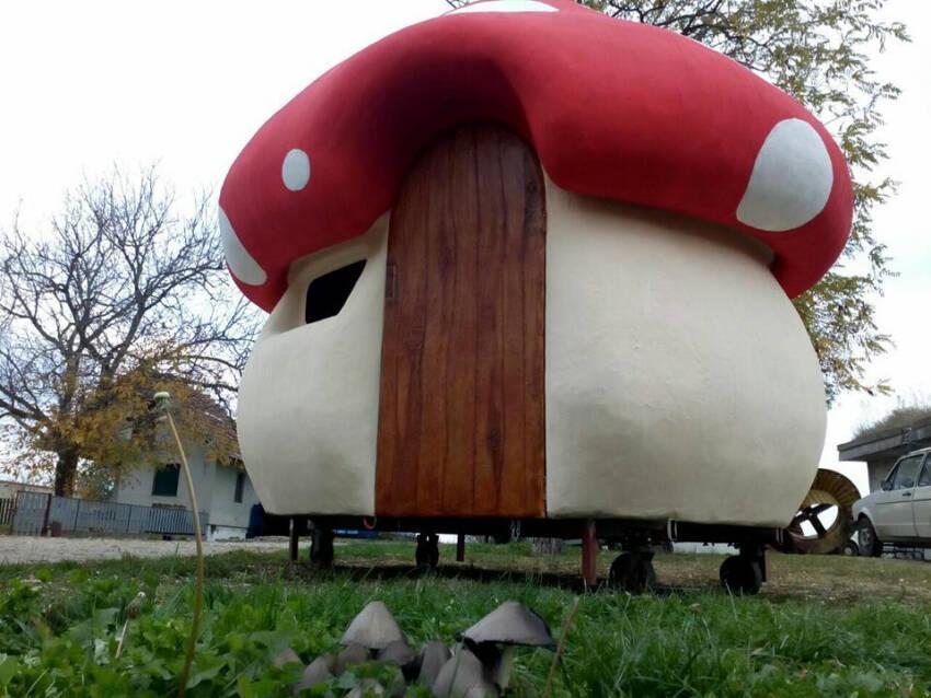 Garsonjera- pečurka izazvala je veliku pažnju u Novom Sadu