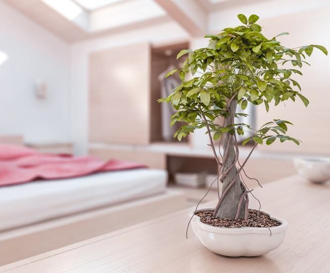 Feng Shui biljke u vašoj spavaćoj sobi
