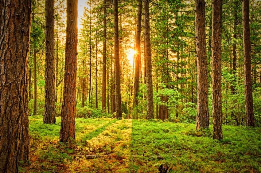 Šume Srbije