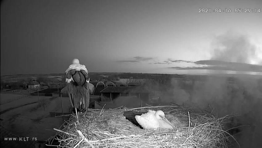 Praćenje celog životnog ciklusa jednog para roda u Šumadiji