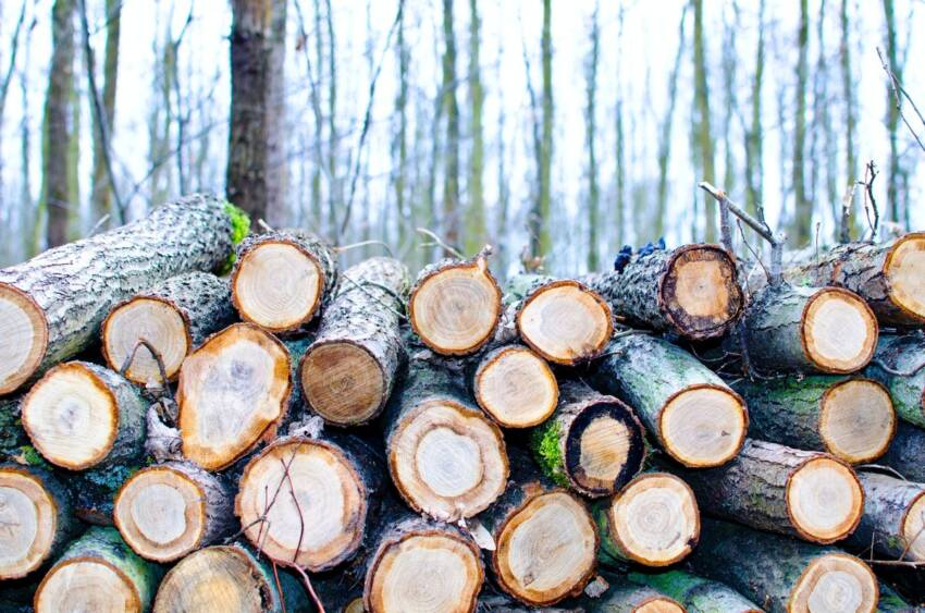 drvo stolarija